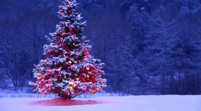 Christmas Trees – Convergent Streams